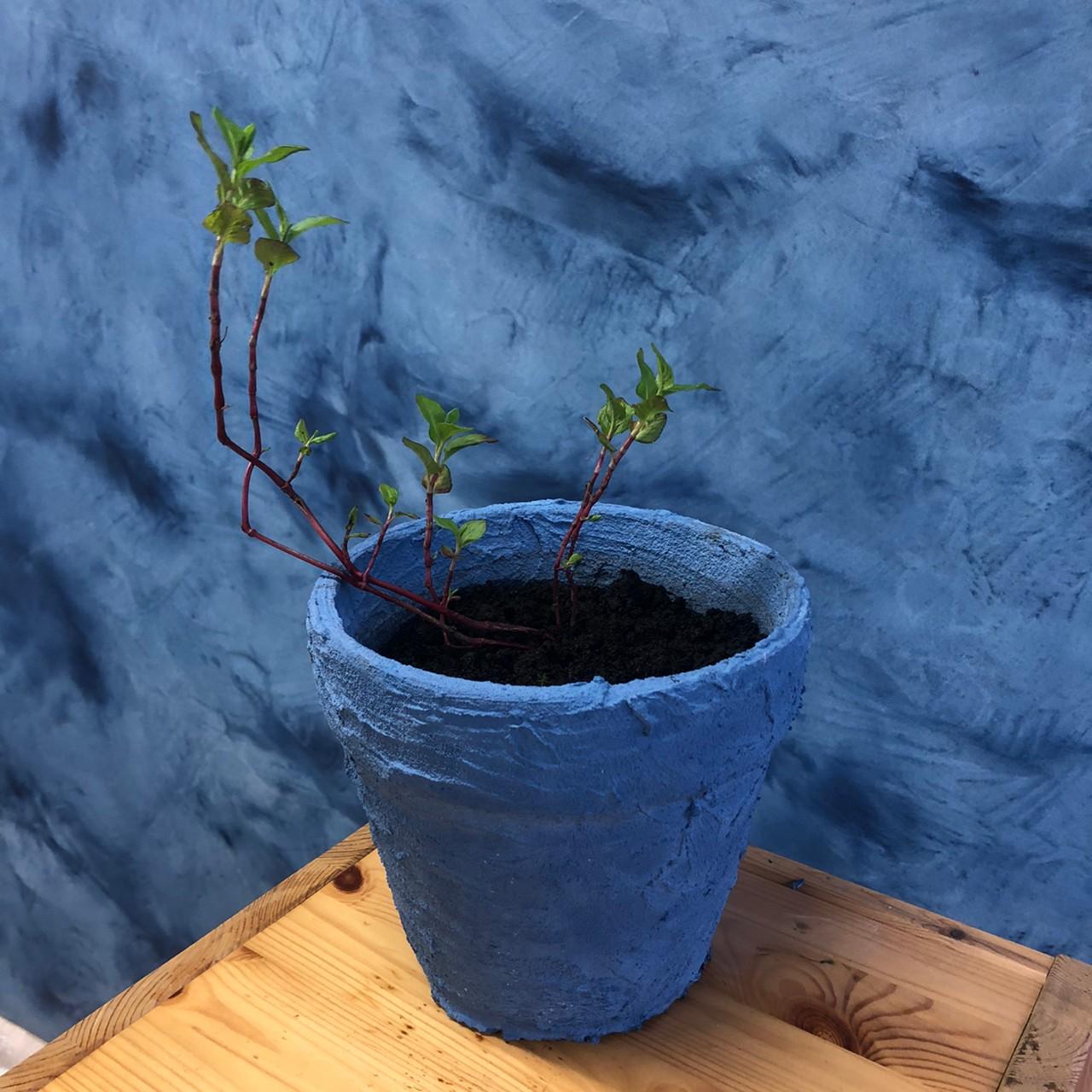 植木鉢への藍施工